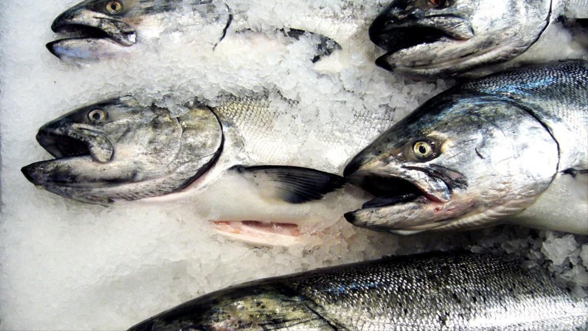 M s de un tercio de los peces que matamos para consumo for Cria de peces para consumo humano
