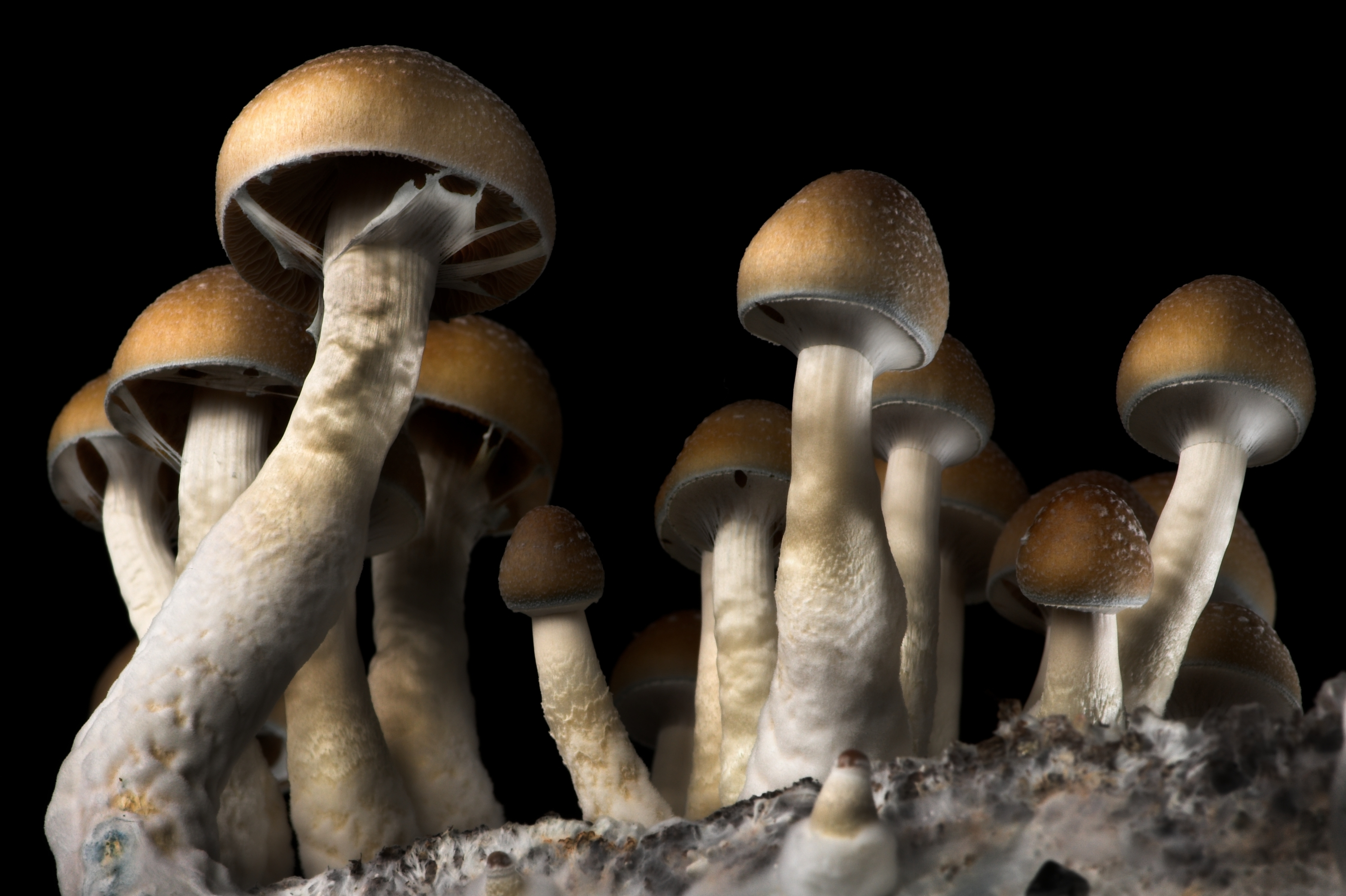 These States Are Leading the Fight to Legalize Shrooms - VICE