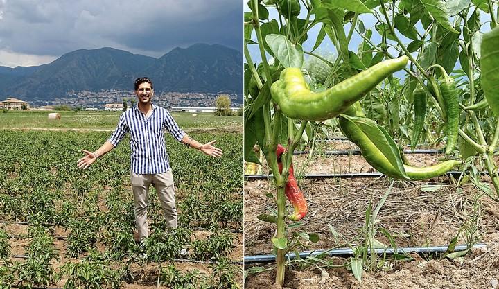 Il laureato in economia che coltiva gli ortaggi del Cilento a rischio estinzione
