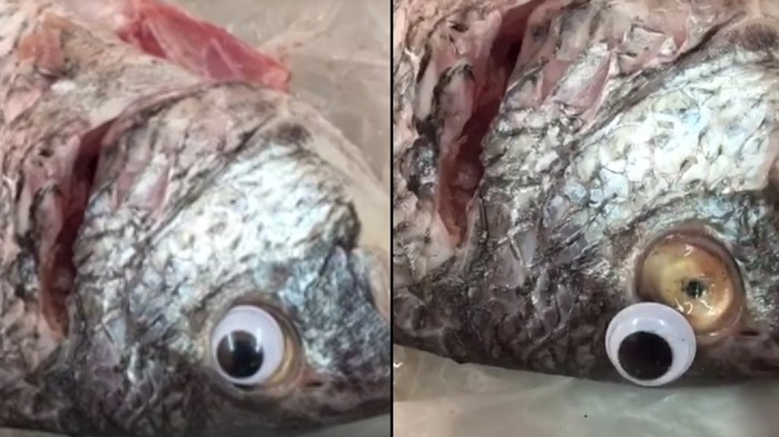 Fish Shop Shut Down for Using Googly Eyes to Make Fish Look Fresher