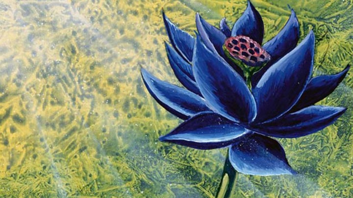 The Black Lotus Documentary Explores What Makes Us Spend Small Fortunes on Pieces of Cardboard