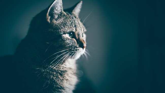f43f4fcdafa4 «Αλγόριθμος Θανάτου»  Η Γάτα που Μπορούσε να Προβλέψει τον Θάνατο