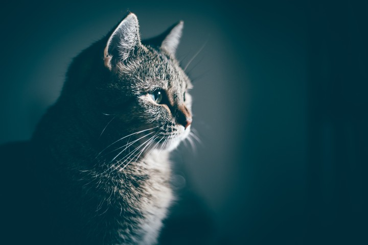 The Cat Who Could Predict Death