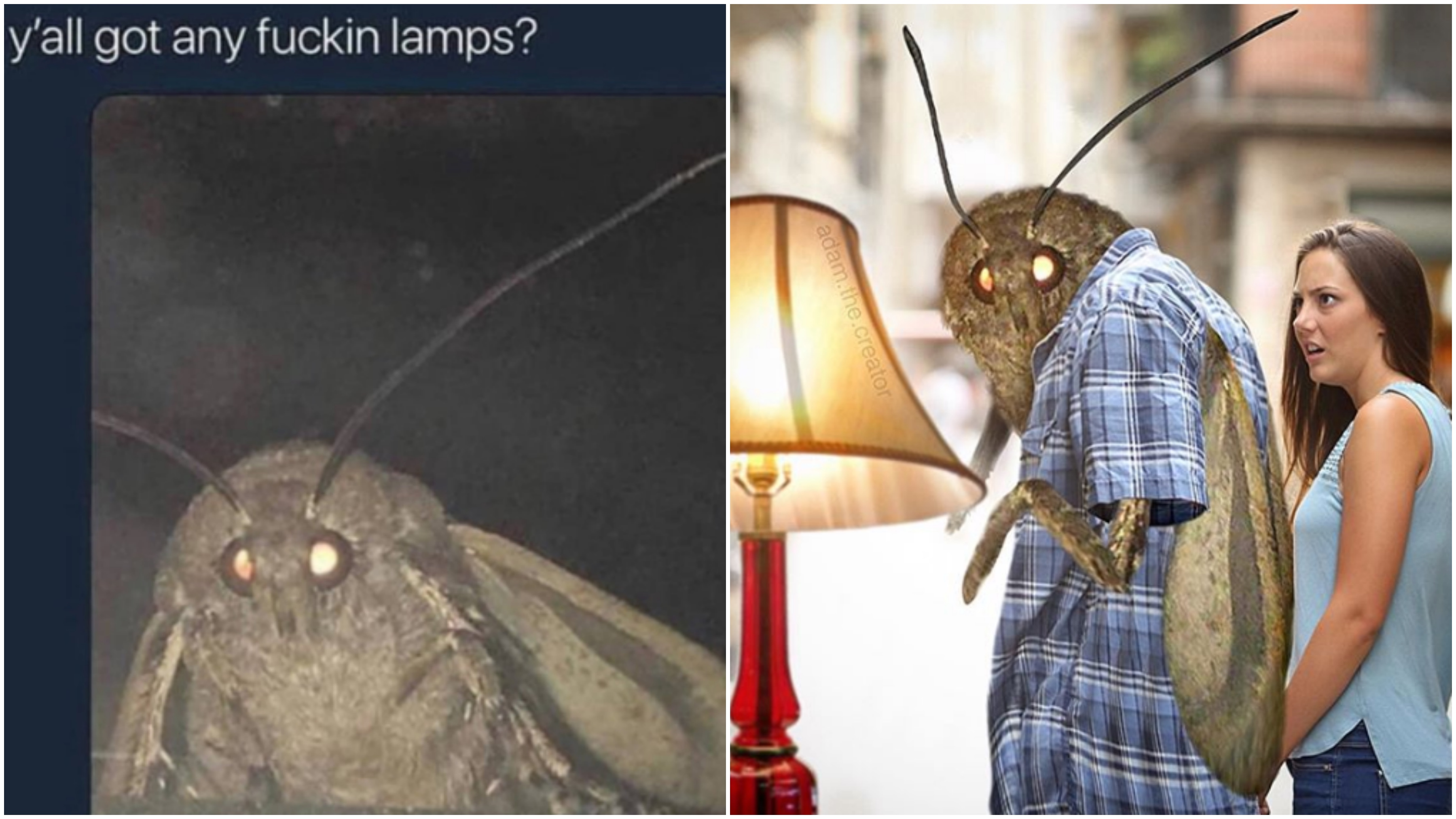 Moth Memes Are Here To Numb The Pain Of Existence Vice