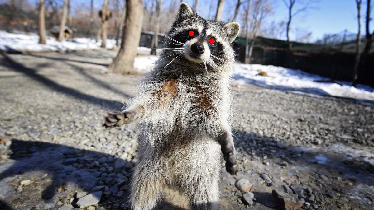 The Zombie Raccoon Apocalypse Has Reached New York City