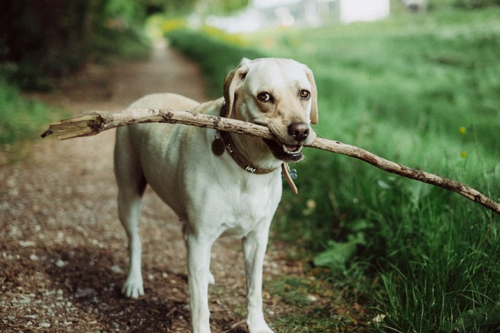 Research Has Probably Been Overstating How Smart Dogs Are
