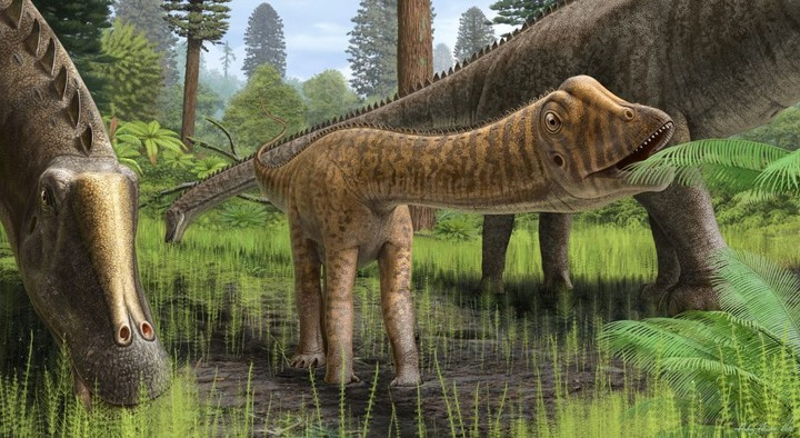 What This Rare Skull Tells Us About Dinosaur Parenting - VICE