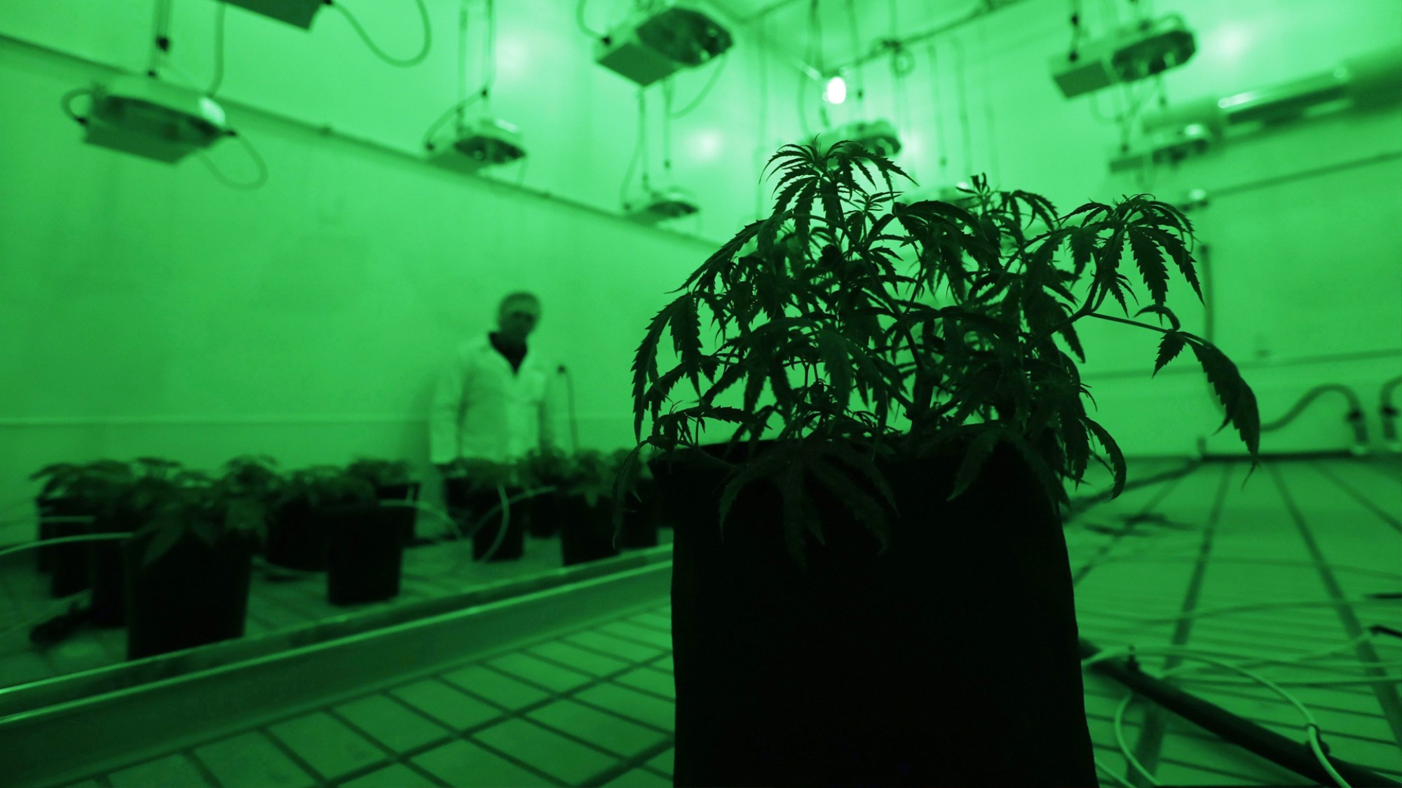 How the Black Market in Canada Is Responding to Weed