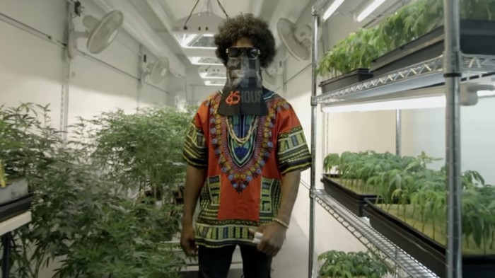 We Asked Weed Dealers What They Think About Cannabis Legalization