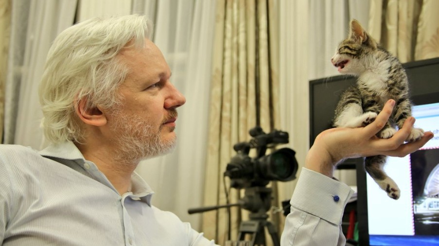 Julian Assange Isn't Allowed Online unless He Starts Looking after His Cat