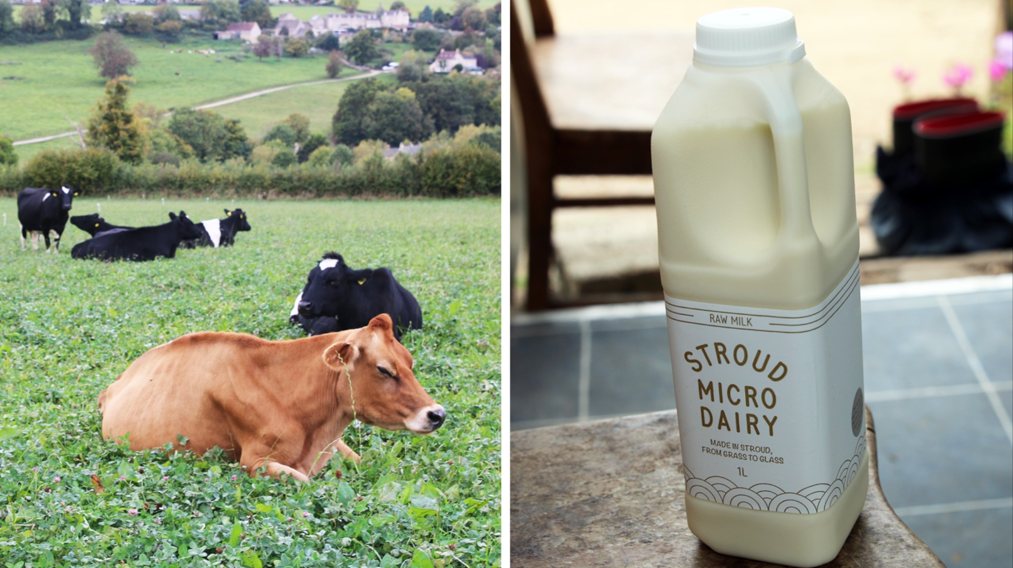 What It's Like to Run a Dairy Farm When No One Drinks Milk