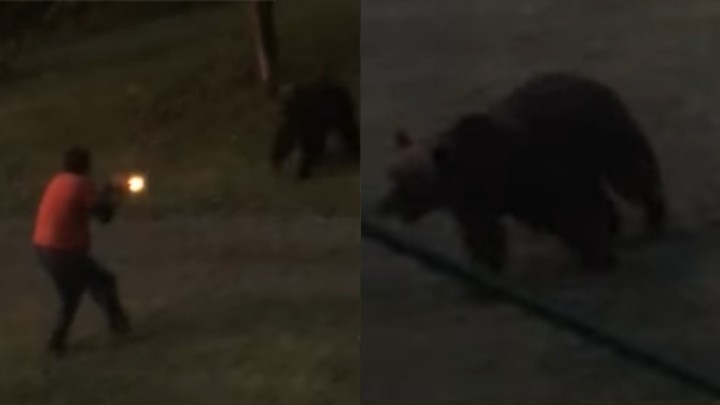 Watch this Terrifying Video of a Grizzly Charging a Man and his Dog