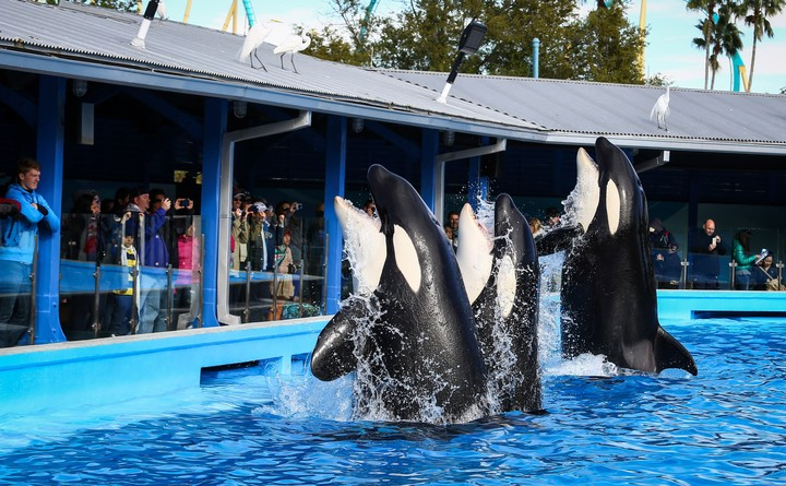 SeaWorld Is Trying to Coax Back Visitors with Free Beer