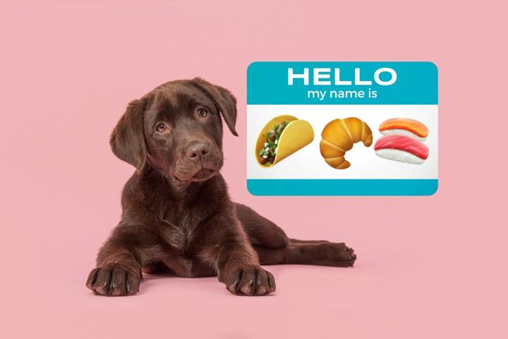 Life Hack: Name Your Pet After a Plural Food Item