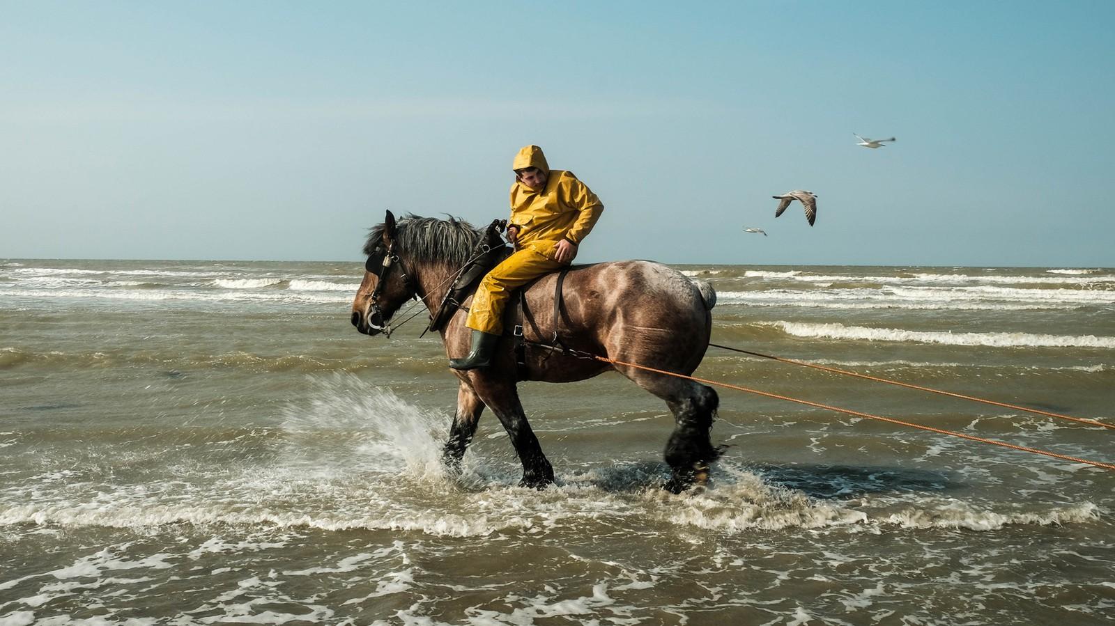 À cheval avec les pêcheurs de crevettes grises