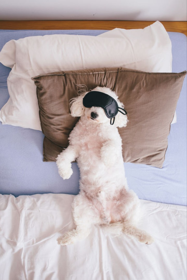 It's Better to Sleep Next to a Dog than a Man, Study Says
