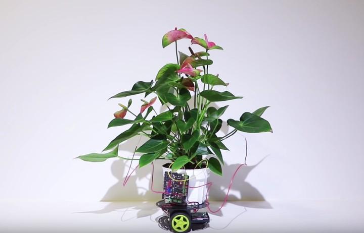 Cyborg Plant Controls a Robot to Move Itself Towards Light