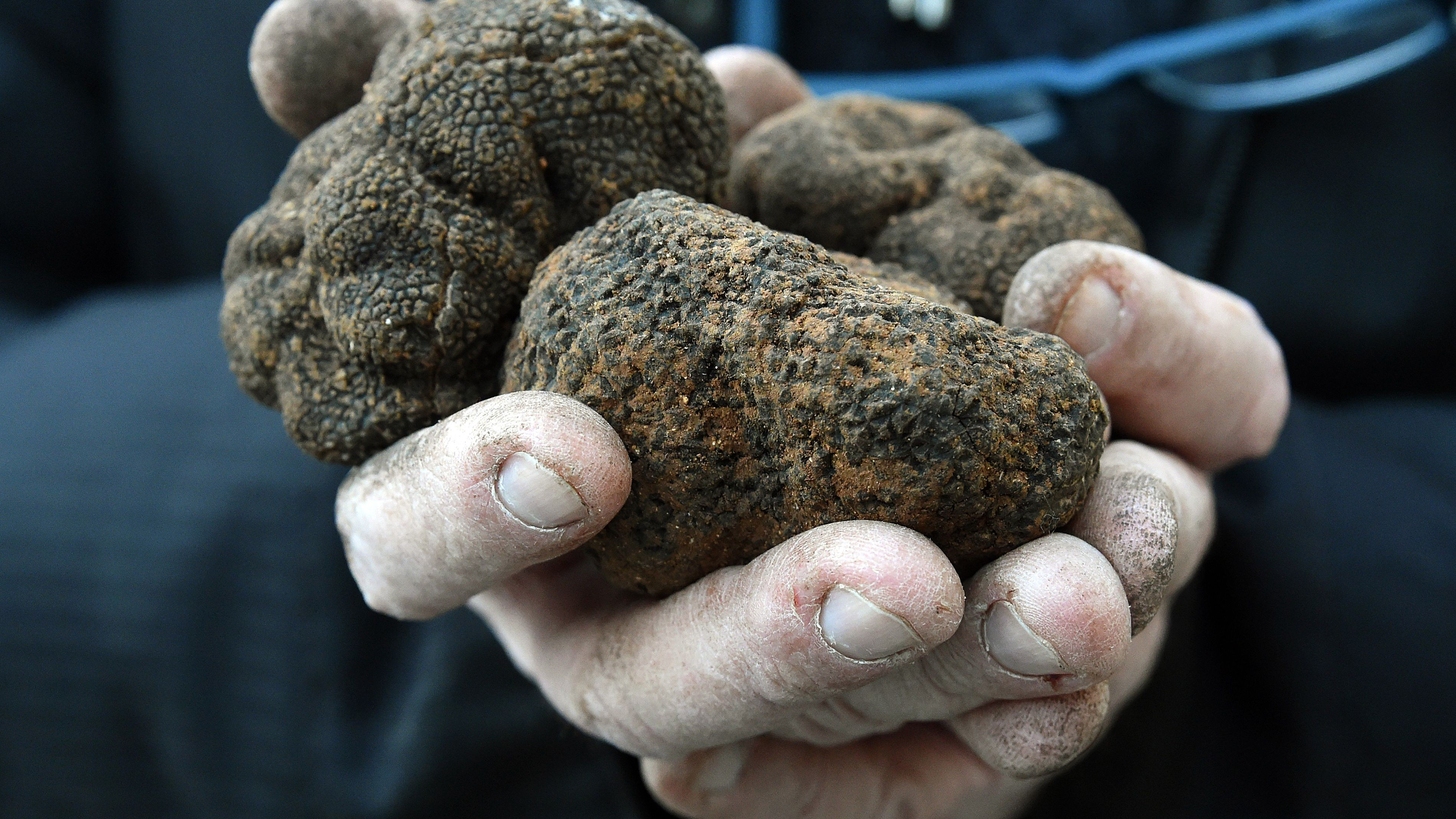 French Black Truffles Could Disappear Within a Generation, Study Finds