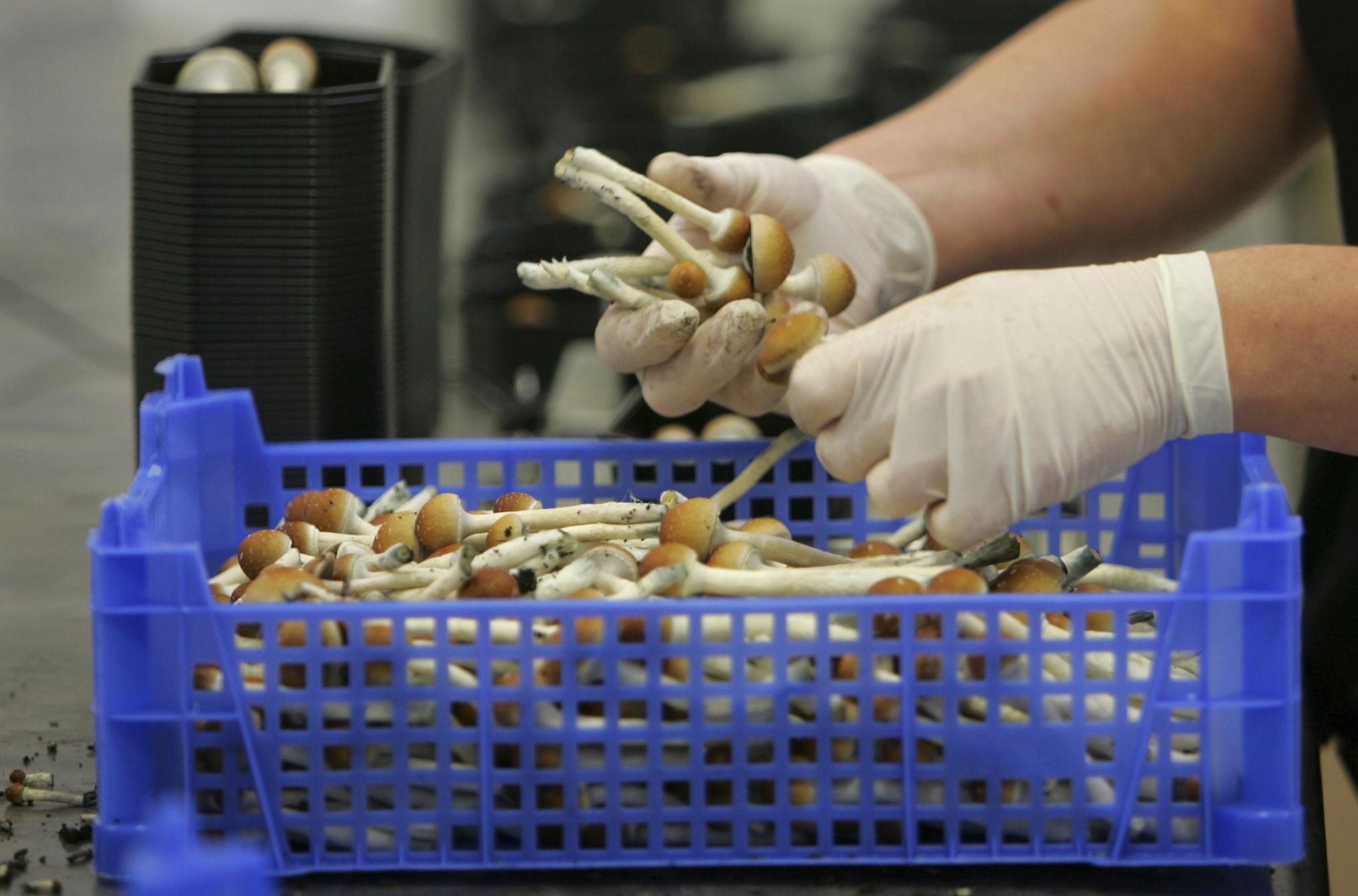 Magic mushrooms are one step closer to decriminalization in Denver and Oregon
