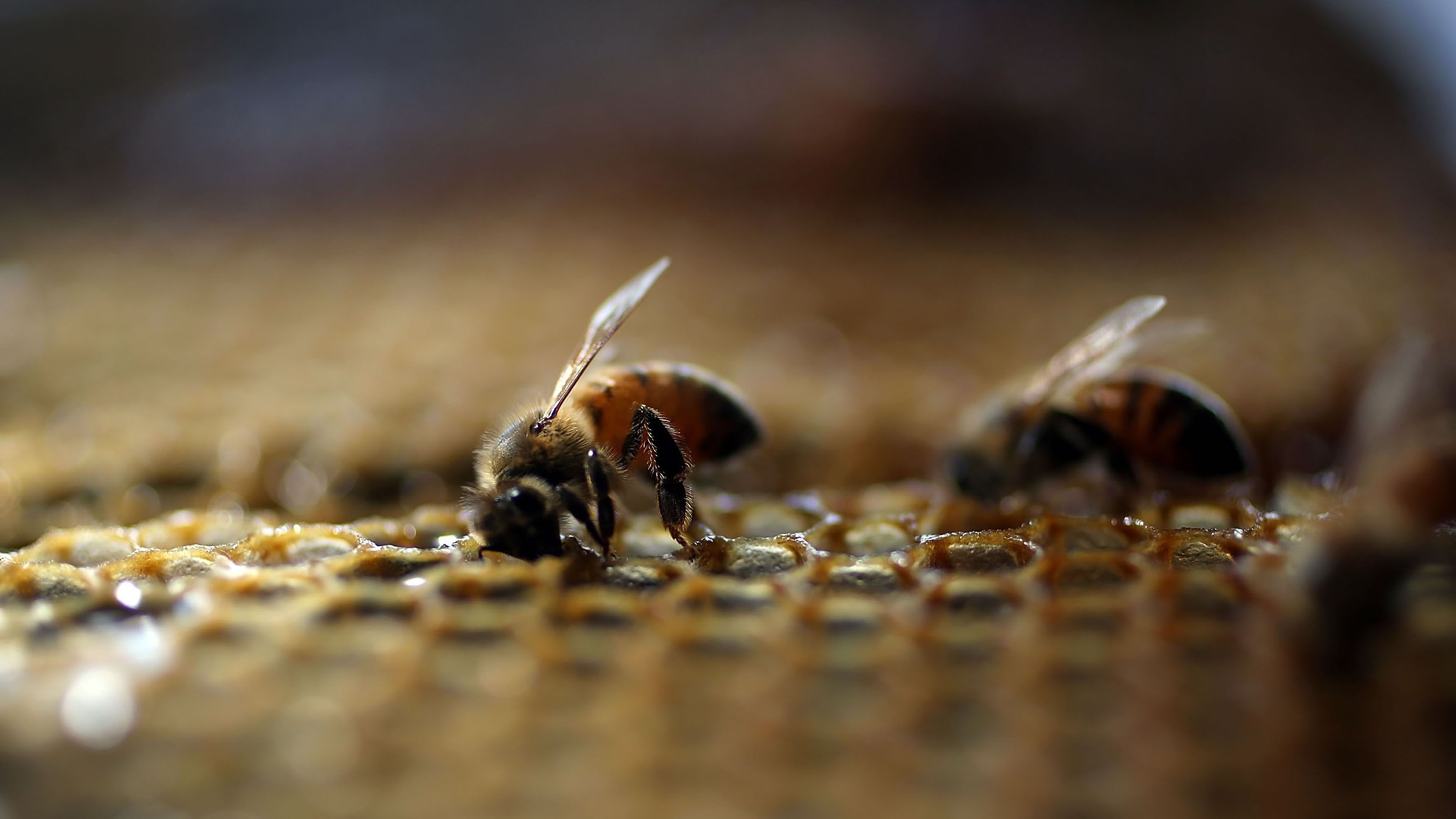 The First-Ever Insect Vaccine Is Designed to Protect Bees from Devastating Diseases