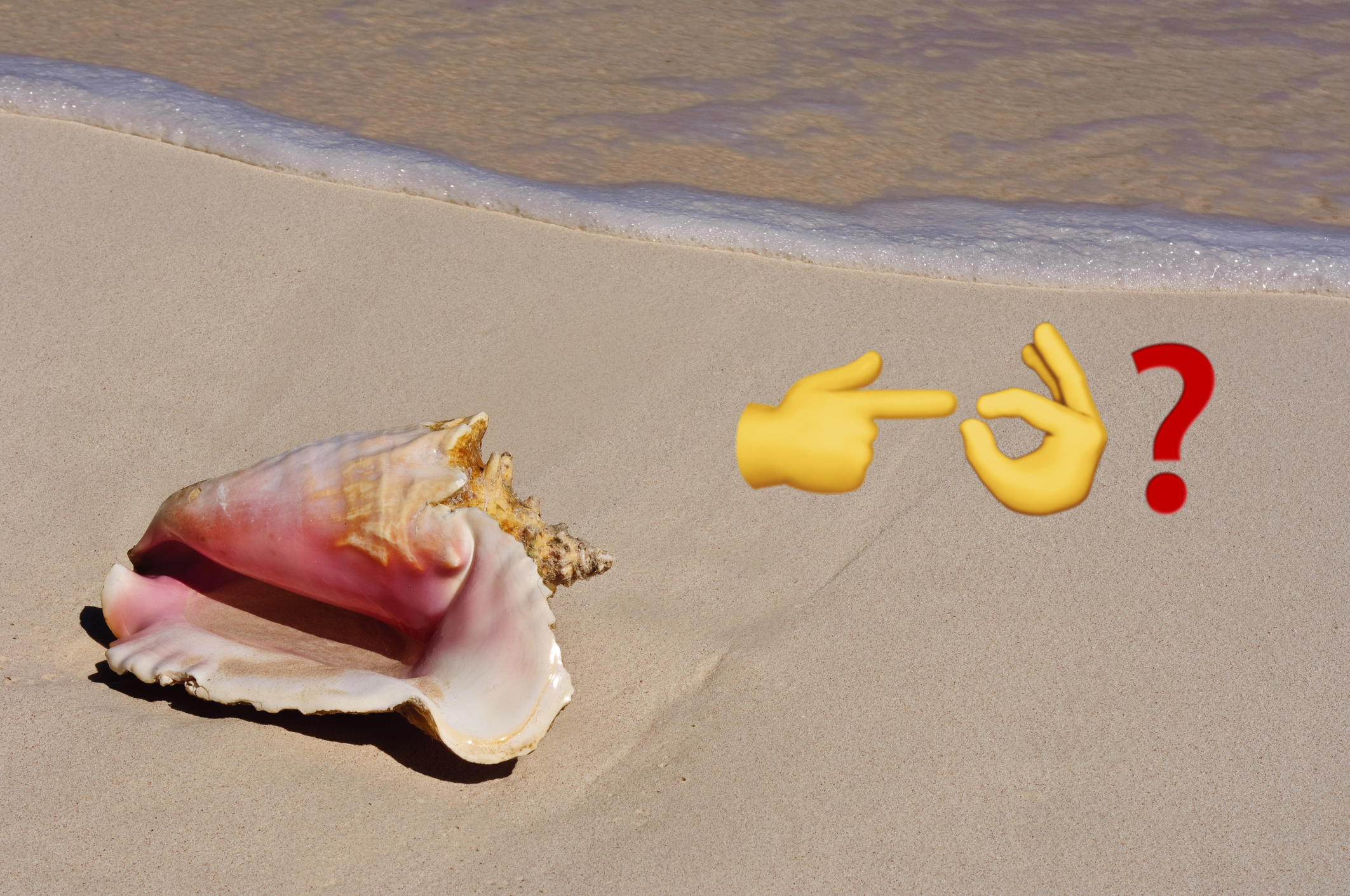 Can Eating Conch Turn You into a Sex God? - VICE
