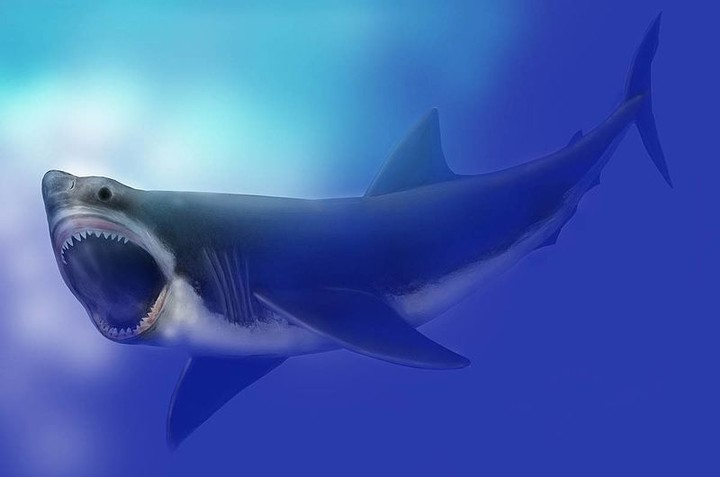 Scientists Think an Exploding Star Helped Kill Off the Megalodon