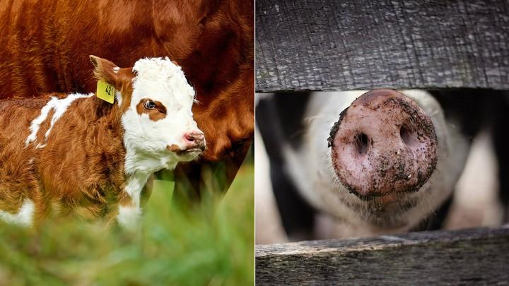 Supermarkt macht in Sachen Tierwohl zwei Schritte nach vorn und einen zurück