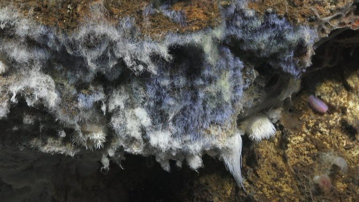 Scientists Discover Upside-Down Lakes and Waterfalls At the Bottom of the Ocean