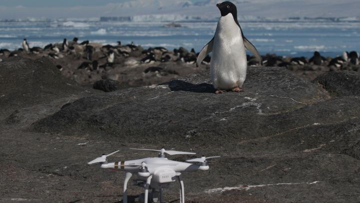 Scientists Discover Hidden 'Supercolony' of 1.5 Million Penguins After Tracking Poop From Space