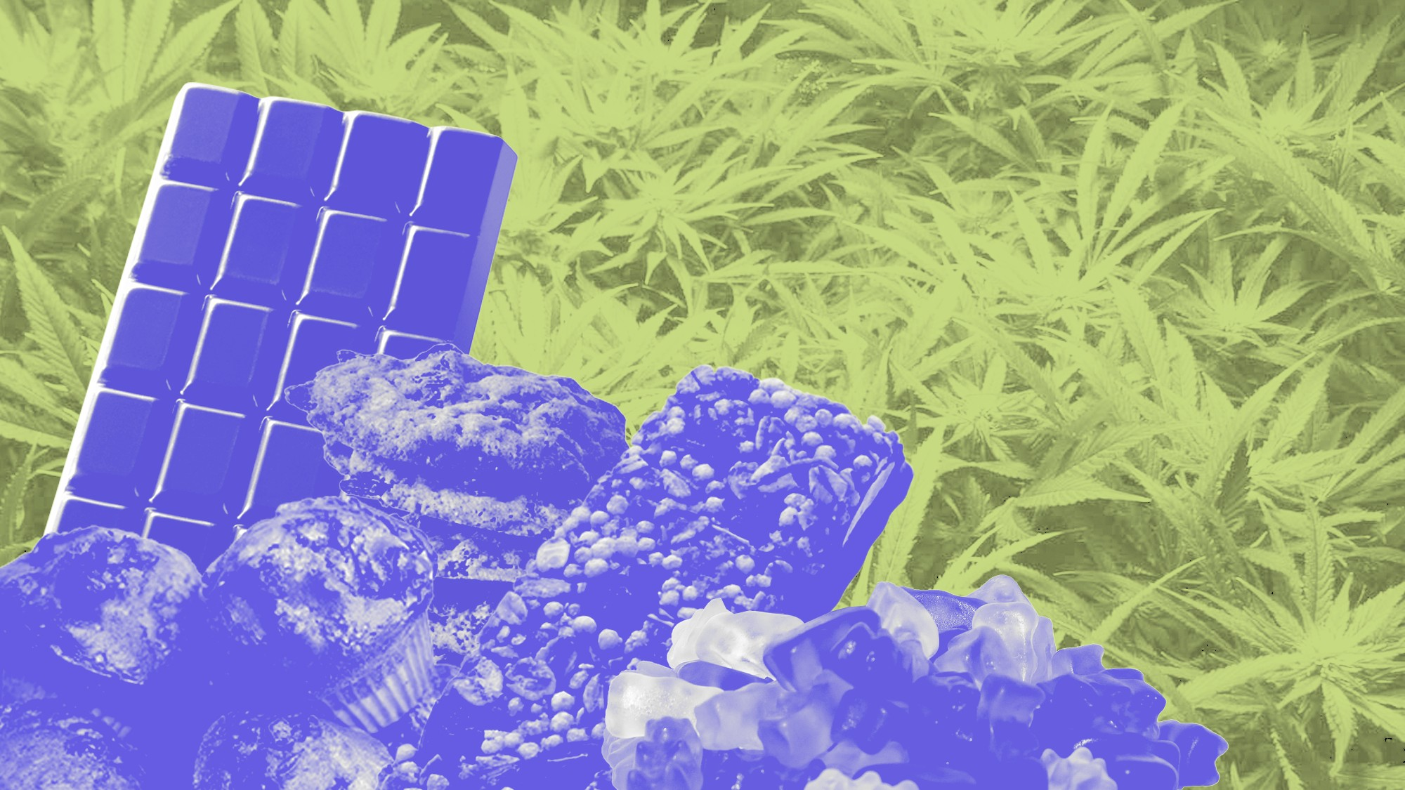 How the US Weed Edibles Scene Compares to Canada - VICE