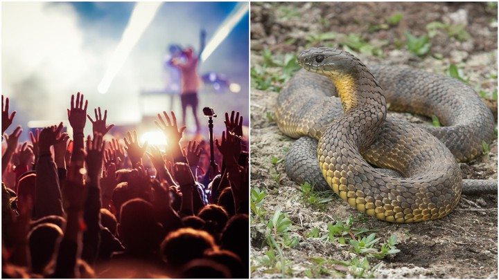 A 'Drug Overdose' at Beyond The Valley Was Probably a Snake Bite
