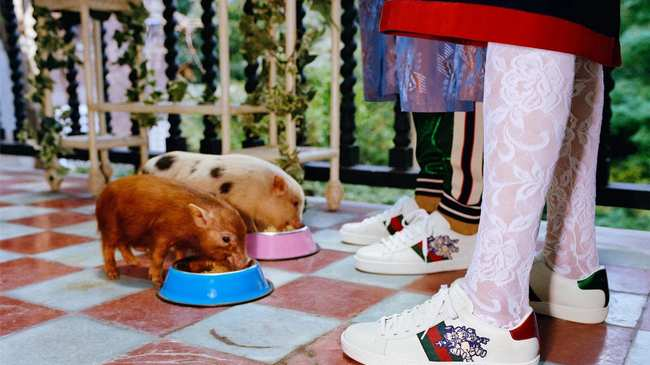 0082529fa48 Gucci release pig-themed lookbook to celebrate Chinese New Year