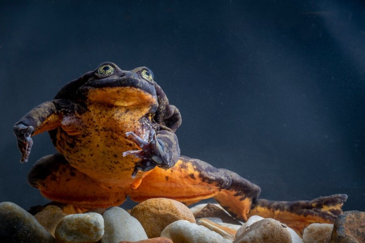 The 'World's Loneliest Frog' Finally Has a Mate