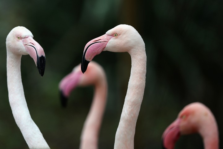 It's Wednesday, January 16, and People Want to Know If They Can Eat Flamingos