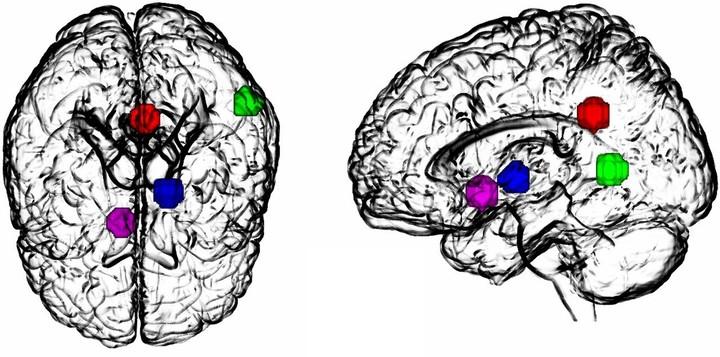 Scientists Identify Key Neural Mechanisms Behind an LSD Trip