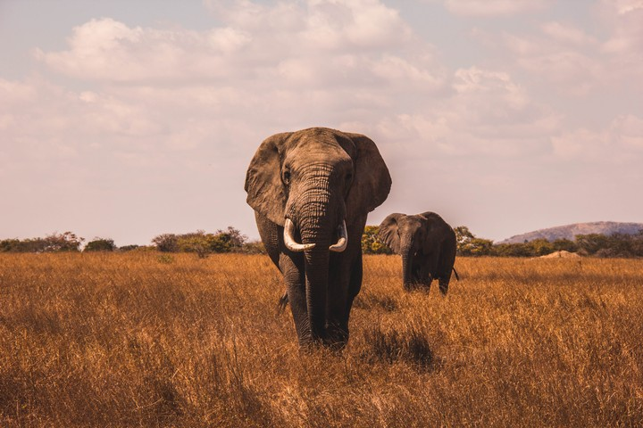 Best Safari Holiday | Where to Go for a Wildlife Adventure in 2019