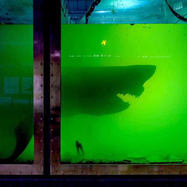 giant worm phillip island shark