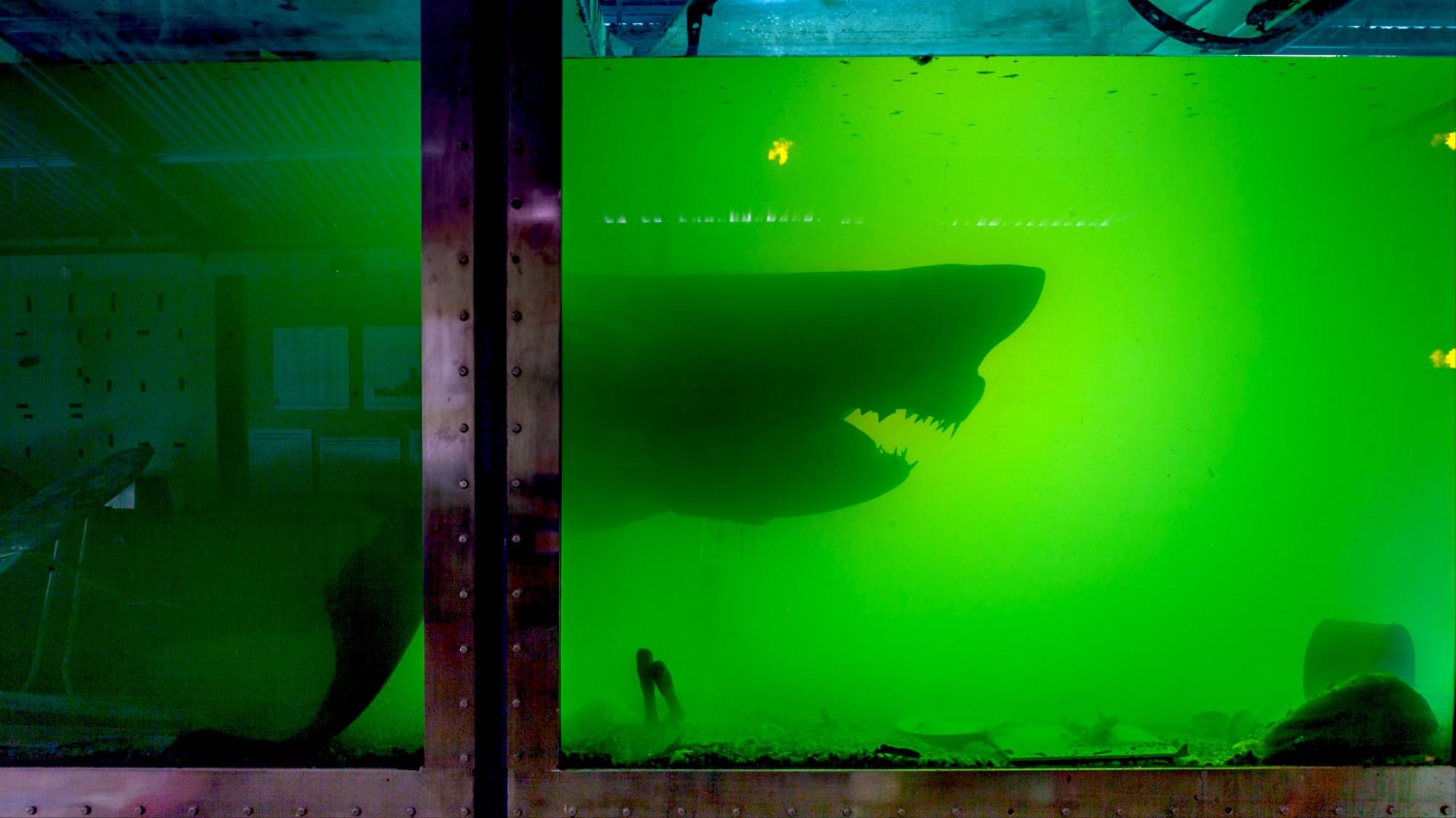 man breaks into abandoned aquarium