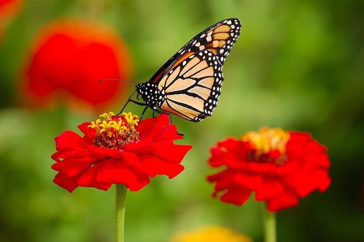 Les insectes disparaissent à un rythme « catastrophique »