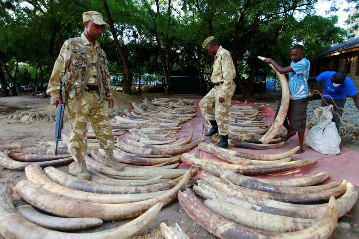 This Woman Killed Hundreds Of Elephants For Their Ivory. Cops Finally Caught Her.
