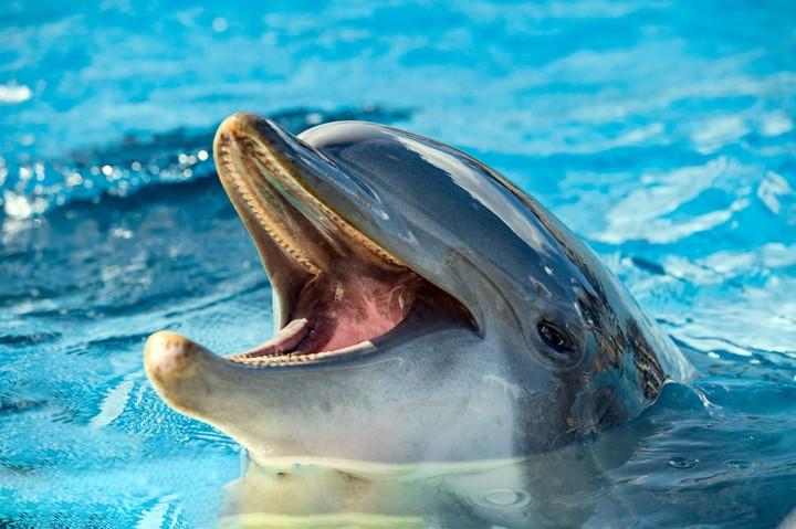 Les dauphins ont un clitoris « remarquablement similaire » à celui des femmes
