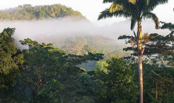 Pantrepant Farm, Jamaica | Where Vice's Senior War Correspondent Goes to Escape - Amuse