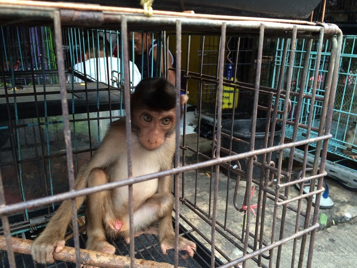 Scientists Breed Monkeys With Human Genes in 'Ethical Nightmare' Experiment
