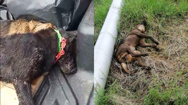 Malaysian Authorities Massacre Dogs Amid Public Outcry