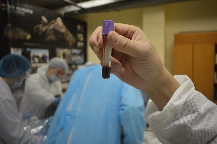 Scientists Discover 42,000-Year-Old Liquid Blood in Preserved Foal