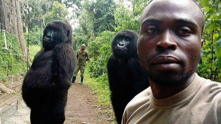 Why the 'Selfie of the Year' Might Do Wonders for Endangered Gorillas