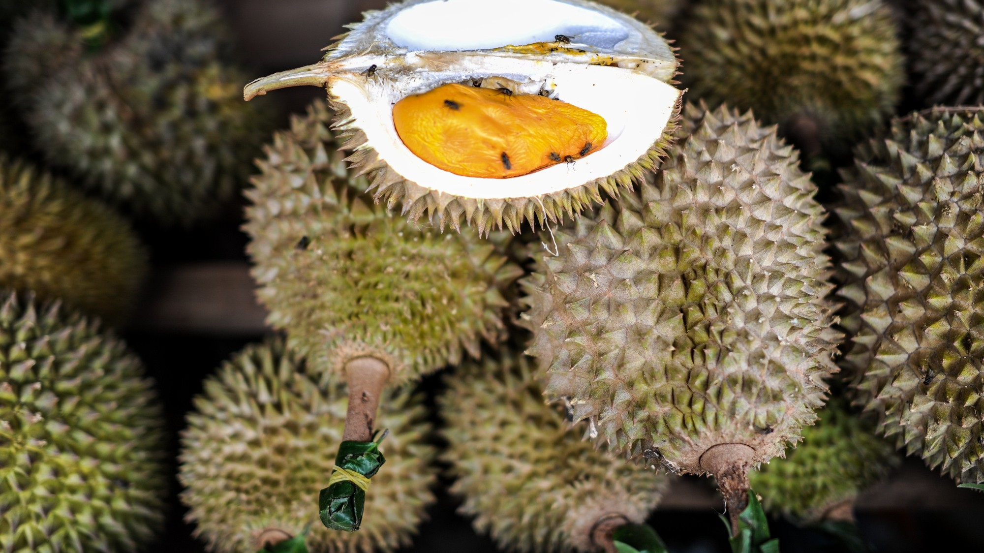 Driver Learns the Hard Way that Durian Can Make You Fail a