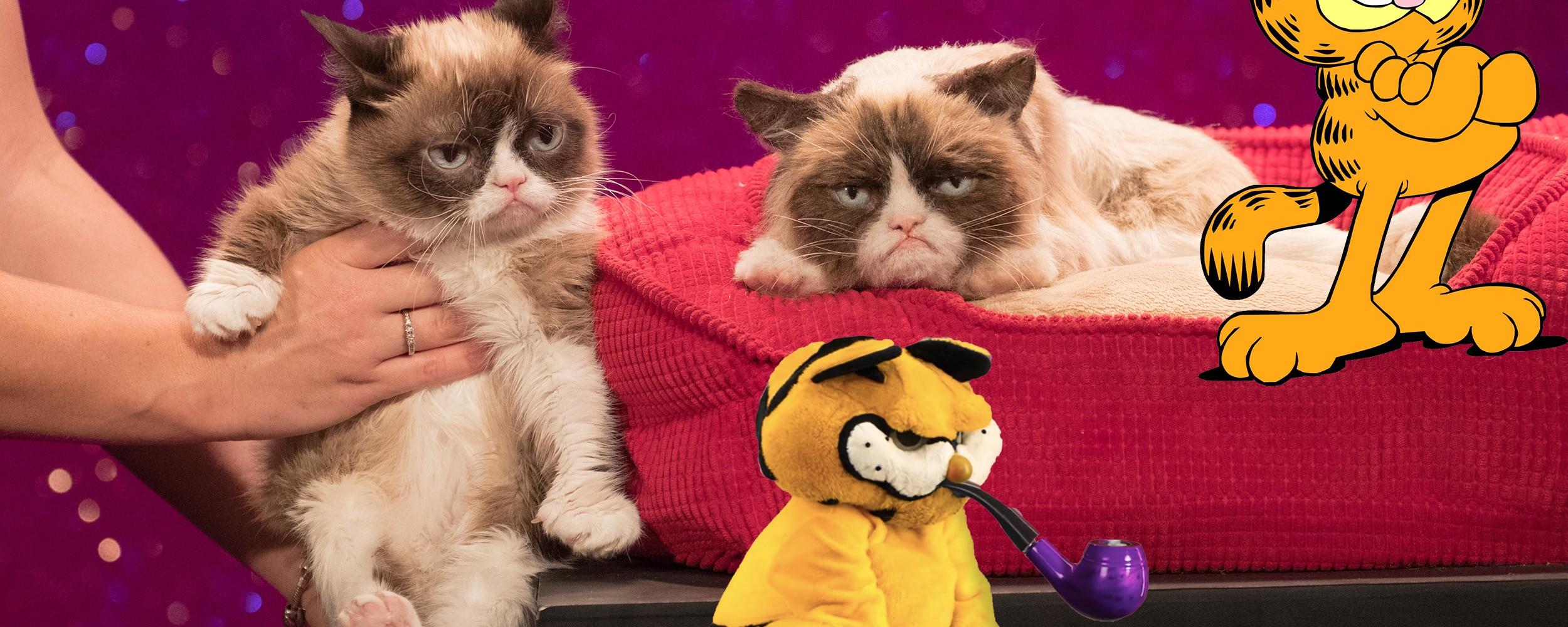 Garfield S Lament Grumpy Cat Was A Meme Born Dead