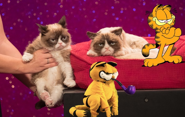 Garfield's Lament: Grumpy Cat Was a Meme Born Dead - VICE