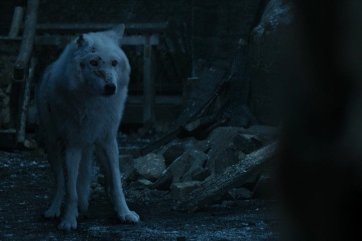 Ghost Was the Only Good Part of the 'Game of Thrones' Finale - VICE